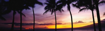 cropped-cropped-cropped-palms-and-sunset-e140187974944721.jpg