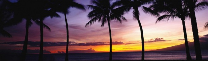 cropped-cropped-palms-and-sunset-e140187974944721.jpg