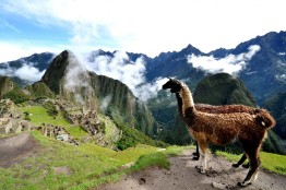 peru lama-and-machu-picchu-1600x1067