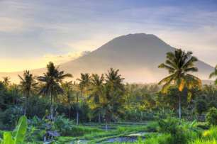 Bali-rice-fields_cs