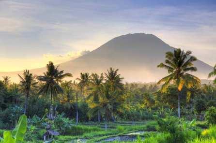 Bali-rice-fields_cs