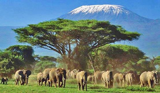 ol-tukai-elephants-kilimanjaro-kenya-fp